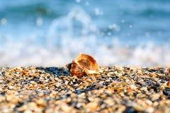 Волна голубых океана или моря на песчаном пляже и красивой морской раковине Стоковое Изображение