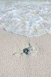 Волна на пляже Стоковое Изображение RF