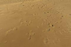 Волна песка Стоковая Фотография RF