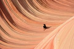 Волна Thw Стоковые Фотографии RF