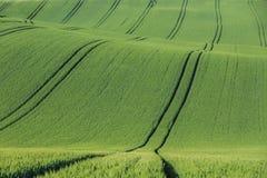 Волнистое аграрное поле Стоковое Изображение