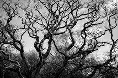 Волнистые ветви Стоковое Изображение