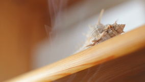 Волнистый помох от incence горя над раковиной моря видеоматериал