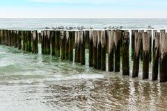 Волнорезы с чайками на пляже, northsea в Domburg Голландии Стоковая Фотография RF