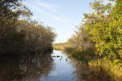 Водный путь болотистых низменностей Стоковые Фото