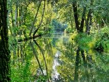 Водный путь с деревьями Стоковые Изображения RF