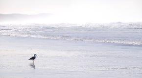 Волны на пляже в солнечном свете Стоковая Фотография RF