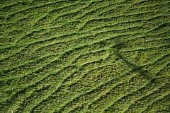 Волны травы стоковые фотографии rf