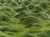Волны травы стоковое фото rf