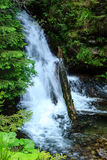 Водопад вуали невесты Стоковая Фотография RF