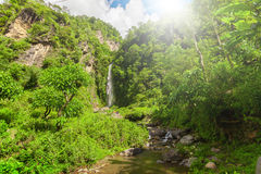 Водопад в глубоком лесе близко Стоковое Фото