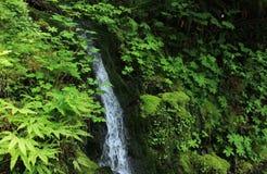 Водопад в лесе заполненном папоротником стоковое фото