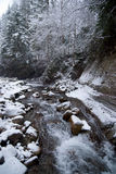 Водопад в лесе зимы горы с покрытыми снег деревьями и снежностями Стоковое Изображение