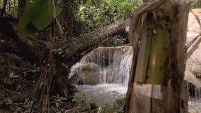 Водопад в естественных тропических джунглях - Таиланде акции видеоматериалы