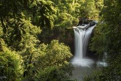 Водопад в зеленом лесе Стоковая Фотография