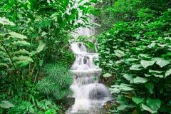 Водопад в дождевом лесе стоковое фото