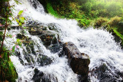 Водопад в пуще осени Стоковые Изображения