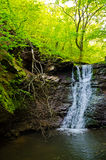 Водопад в пуще Стоковая Фотография