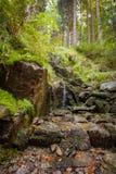 Водопад в пуще Стоковые Изображения