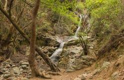 Водопад в пуще Стоковое фото RF
