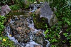 Водопад в пуще Стоковые Изображения RF