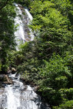 Водопад в древесинах Стоковое Изображение