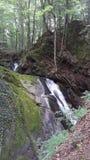 Водопад в древесинах Стоковое Фото