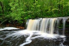 Водопад в северных древесинах Стоковое фото RF