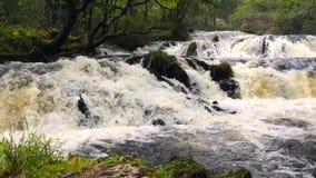 Водопад в северо-западе Шотландии сток-видео
