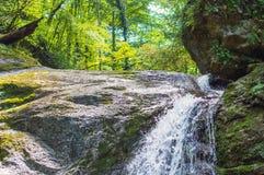 Водопад в темном лесе Стоковые Фото