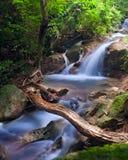 Водопад в тропической пуще стоковая фотография