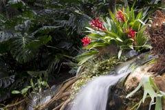 Водопад в троповом саде Стоковые Изображения RF