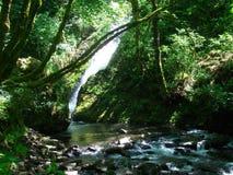 Водопад в ущелье Стоковые Фото