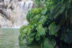 Водопад в Jardin Botanique de Deshaies, острове Гваделупы Стоковое Изображение RF