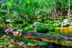водопад глубокого национального парка горы пущи тайский В глубоком лесе Стоковые Фотографии RF