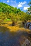 водопад глубокого национального парка горы пущи тайский В глубоком лесе Стоковое Изображение RF