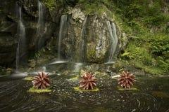 Водопад Ирландии малый Стоковые Изображения RF