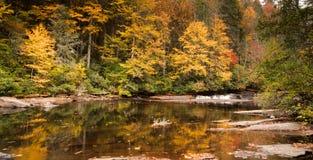 Водопад и лес осенью Стоковые Фото