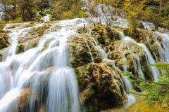 Водопад и поток в лесе Стоковые Изображения