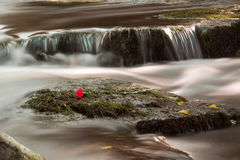 Водопад и поднял Стоковое Изображение