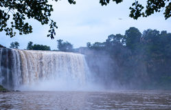 Водопад и Egret Стоковое Изображение