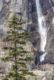 Водопад на горе стоковое фото rf