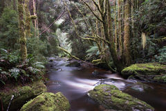 Водопад Нельсона в Тасмании Стоковые Изображения RF
