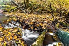 Водопад долгой выдержки blured вода на малом потоке на падении Стоковые Изображения RF