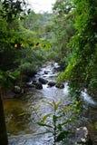 водопад одичалый Стоковые Изображения