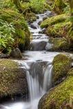 Водопад полесья Стоковое Фото