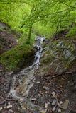 водопад пущи малый Стоковое Изображение