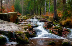 Водопад реки в пуще Стоковое фото RF