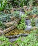 Водопад сада среди тропической зеленой листвы Стоковые Изображения