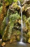 Водопад с зелеными растениями и цветками в Испании Стоковое фото RF